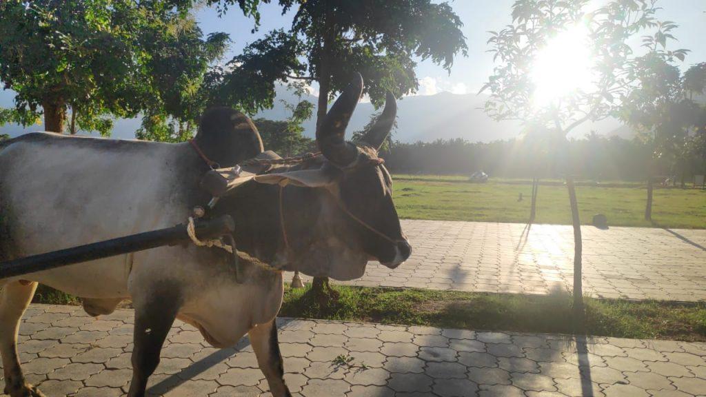 Shruthi Bharadwaj _Isha_Coimbatore